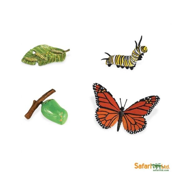 Životní cyklus - Motýl : 95866622602