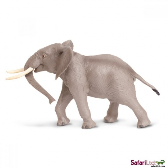 Samec slona afrického : 095866295608