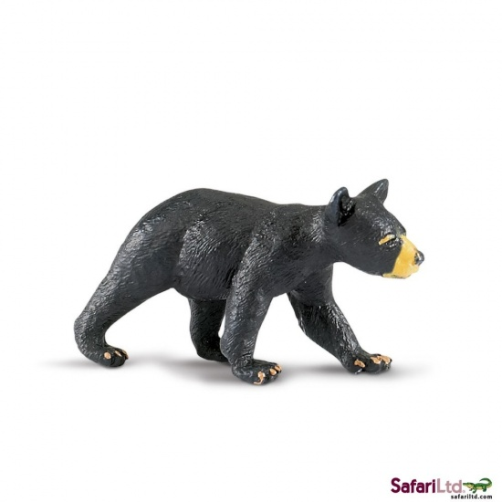 Mládě medvěda baribala