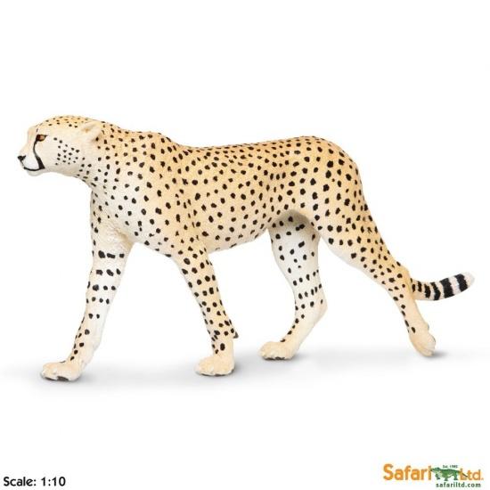 Gepard : 095866112806