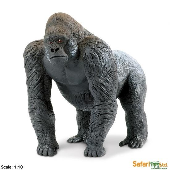 Stříbrohřbetý samec gorily : 95866111502