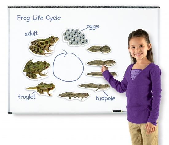 Magnetický životní cyklus - Žába : 765023060416